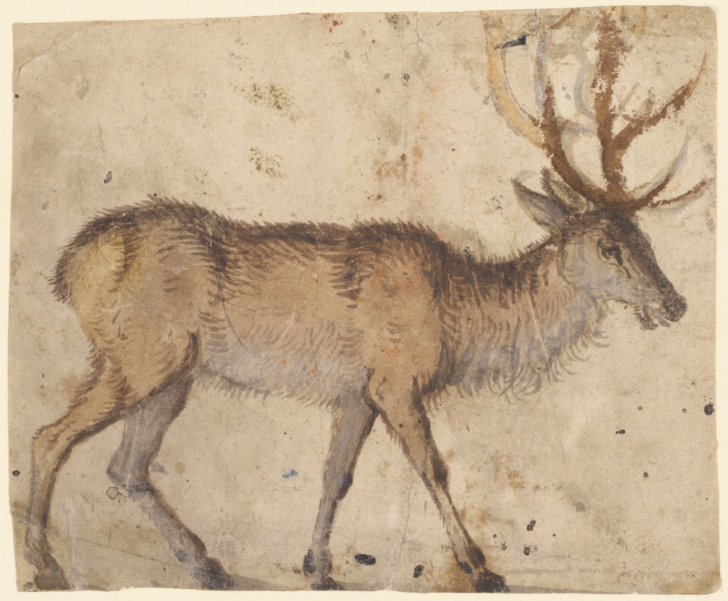 Study of a Stag (recto); Study of Goats (verso); Lucas Cranach the Elder (German, 1472 - 1553); about 1520–1530; Brush with brown and red brown wash, heightened with white gouache (recto); brush with black, gray, and green wash, black chalk (verso); 13.5 × 16.7 cm (5 5/16 × 6 9/16 in.); 84.GC.36; The J. Paul Getty Museum, Los Angeles; Rights Statement: No Copyright - United States