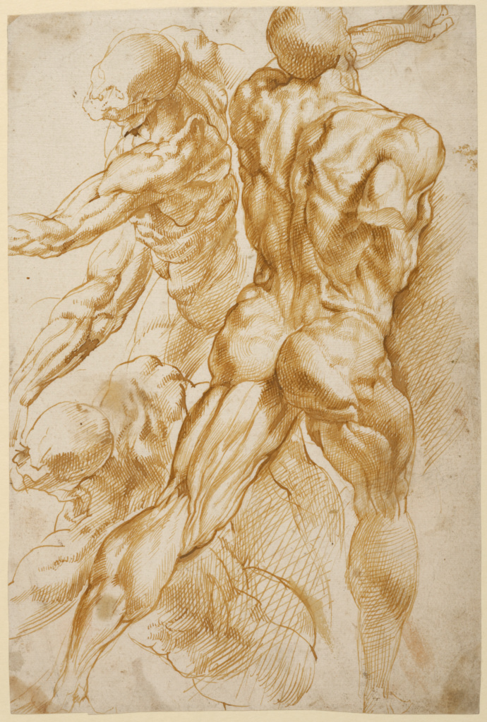 Anatomical Studies; Peter Paul Rubens (Flemish, 1577 - 1640); about 1600–1605; Pen and brown ink; 27.9 × 18.7 cm (11 × 7 3/8 in.); 88.GA.86; Rights Statement: No Copyright - United States