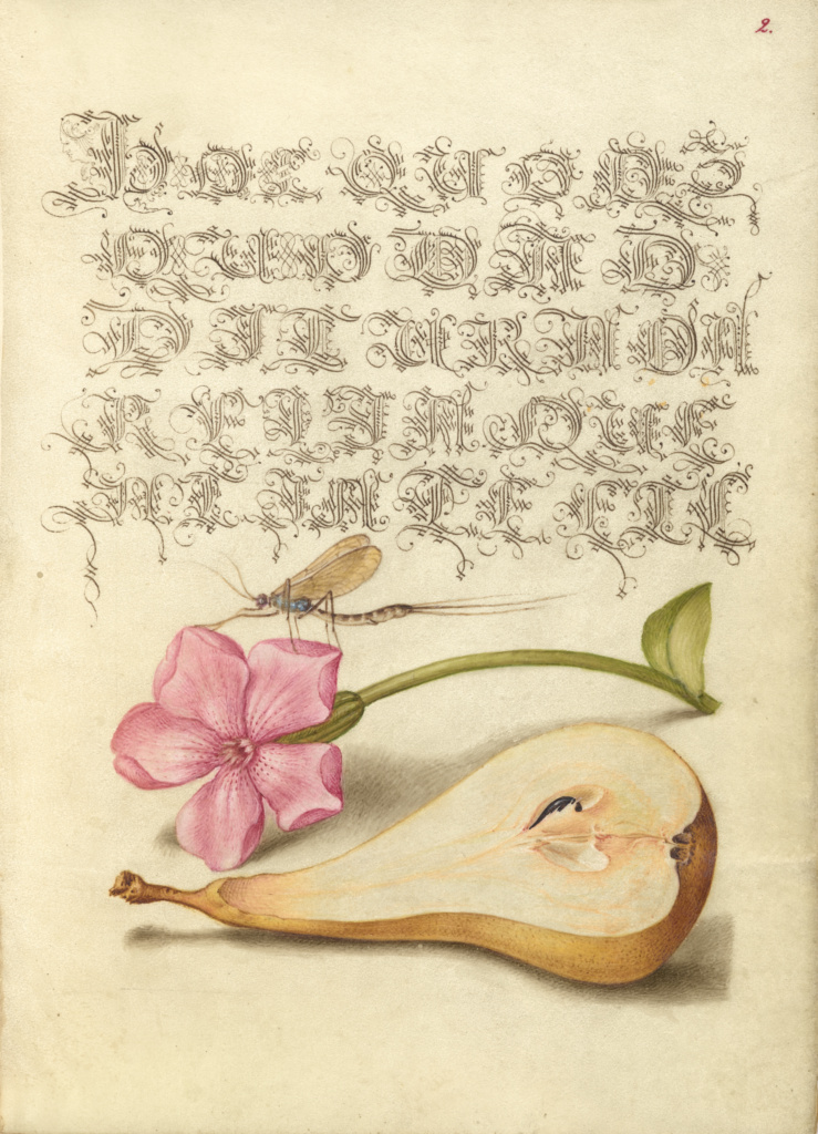 Mayfly, Red Campion, and Pear; Joris Hoefnagel (Flemish / Hungarian, 1542 - 1600), and Georg Bocskay (Hungarian, died 1575); Vienna, Austria; 1561–1562; illumination added 1591–1596; Watercolors, gold and silver paint, and ink on parchment; Leaf: 16.6 × 12.4 cm (6 9/16 × 4 7/8 in.); Ms. 20 (86.MV.527), fol. 2; The J. Paul Getty Museum, Los Angeles, Ms. 20, fol. 2; Rights Statement: No Copyright - United States