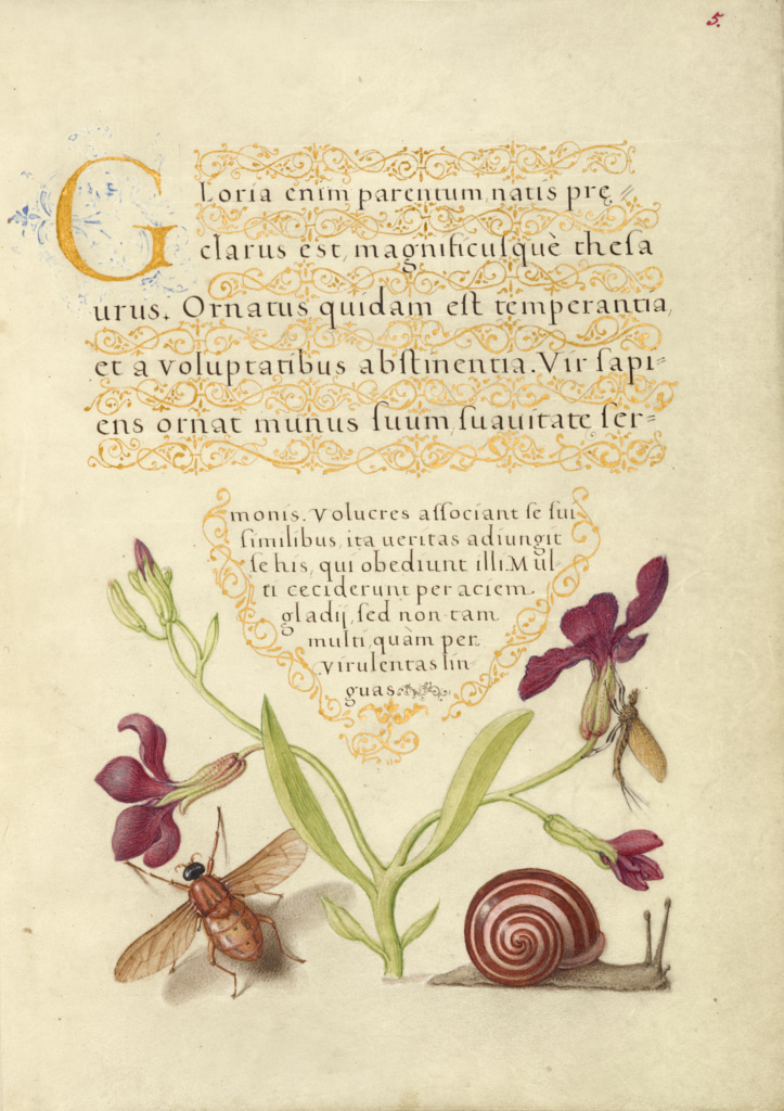 Gillyflower, Mayfly, Fly, and Snail; Joris Hoefnagel (Flemish / Hungarian, 1542 - 1600), and Georg Bocskay (Hungarian, died 1575); Vienna, Austria; 1561–1562; illumination added 1591–1596; Watercolors, gold and silver paint, and ink on parchment; Leaf: 16.6 × 12.4 cm (6 9/16 × 4 7/8 in.); Ms. 20 (86.MV.527), fol. 5; The J. Paul Getty Museum, Los Angeles, Ms. 20, fol. 5; Rights Statement: No Copyright - United States
