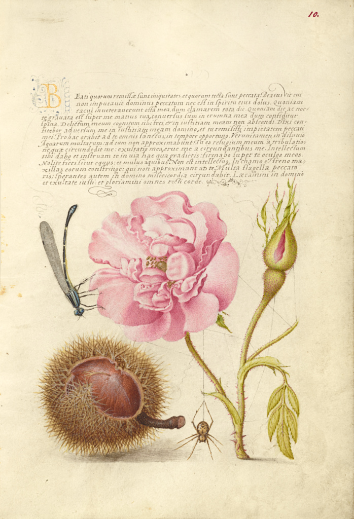 Damselfly, French Rose, Spanish Chestnut, and Spider; Joris Hoefnagel (Flemish / Hungarian, 1542 - 1600), and Georg Bocskay (Hungarian, died 1575); Vienna, Austria; 1561–1562; illumination added 1591–1596; Watercolors, gold and silver paint, and ink on parchment; Leaf: 16.6 × 12.4 cm (6 9/16 × 4 7/8 in.); Ms. 20 (86.MV.527), fol. 10; The J. Paul Getty Museum, Los Angeles, Ms. 20, fol. 10; Rights Statement: No Copyright - United States