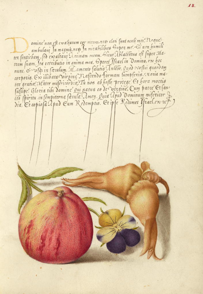 Common Apple, European Wild Pansy, and Giant Filbert; Joris Hoefnagel (Flemish / Hungarian, 1542 - 1600), and Georg Bocskay (Hungarian, died 1575); Vienna, Austria; 1561–1562; illumination added 1591–1596; Watercolors, gold and silver paint, and ink on parchment; Leaf: 16.6 × 12.4 cm (6 9/16 × 4 7/8 in.); Ms. 20 (86.MV.527), fol. 18; The J. Paul Getty Museum, Los Angeles, Ms. 20, fol. 18; Rights Statement: No Copyright - United States