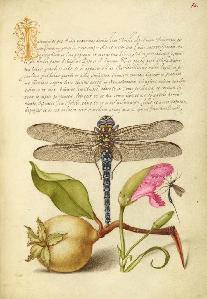 Dragonfly, Pear, Carnation, and Insect; Joris Hoefnagel (Flemish / Hungarian, 1542 - 1600), and Georg Bocskay (Hungarian, died 1575); 1561–1562; illumination added 1591–1596; Watercolors, gold and silver paint, and ink on parchment; Leaf: 16.6 × 12.4 cm (6 9/16 × 4 7/8 in.); Ms. 20 (86.MV.527), fol. 76; Rights Statement: No Copyright - United States