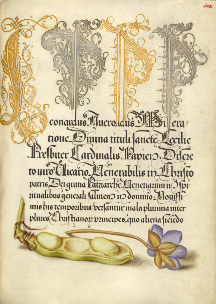 Broad Bean and Liverleaf; Joris Hoefnagel (Flemish / Hungarian, 1542 - 1600), and Georg Bocskay (Hungarian, died 1575); 1561–1562; illumination added 1591–1596; Watercolors, gold and silver paint, and ink on parchment; Leaf: 16.6 × 12.4 cm (6 9/16 × 4 7/8 in.); Ms. 20 (86.MV.527), fol. 103; Rights Statement: No Copyright - United States