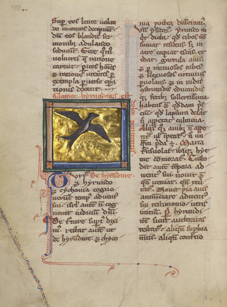 A Swallow; Unknown; Thérouanne ?, France (formerly Flanders); about 1270; Tempera colors, gold leaf, and ink on parchment; Leaf: 19.1 × 14.3 cm (7 1/2 × 5 5/8 in.); Ms. Ludwig XV 3 (83.MR.173), fol. 30v; The J. Paul Getty Museum, Los Angeles, Ms. Ludwig XV 3, fol. 30v; Rights Statement: No Copyright - United States