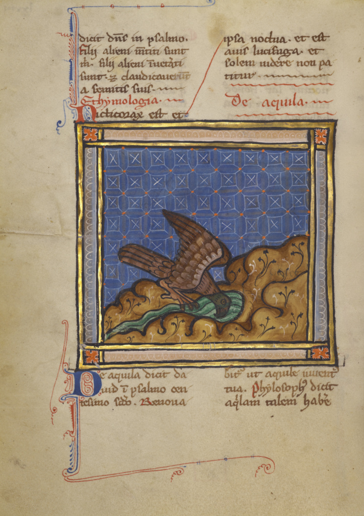 An Eagle; Unknown; Thérouanne ?, France (formerly Flanders); about 1270; Tempera colors, gold leaf, and ink on parchment; Leaf: 19.1 × 14.3 cm (7 1/2 × 5 5/8 in.); Ms. Ludwig XV 3 (83.MR.173), fol. 73v; The J. Paul Getty Museum, Los Angeles, Ms. Ludwig XV 3, fol. 73v; Rights Statement: No Copyright - United States