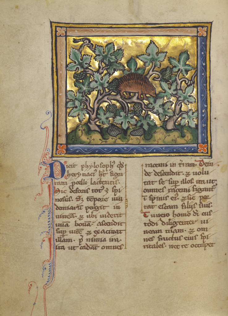 A Hedgehog; Unknown; about 1270; Tempera colors, gold leaf, and ink on parchment; Leaf: 19.1 × 14.3 cm (7 1/2 × 5 5/8 in.); Ms. Ludwig XV 3 (83.MR.173), fol. 79v; Rights Statement: No Copyright - United States