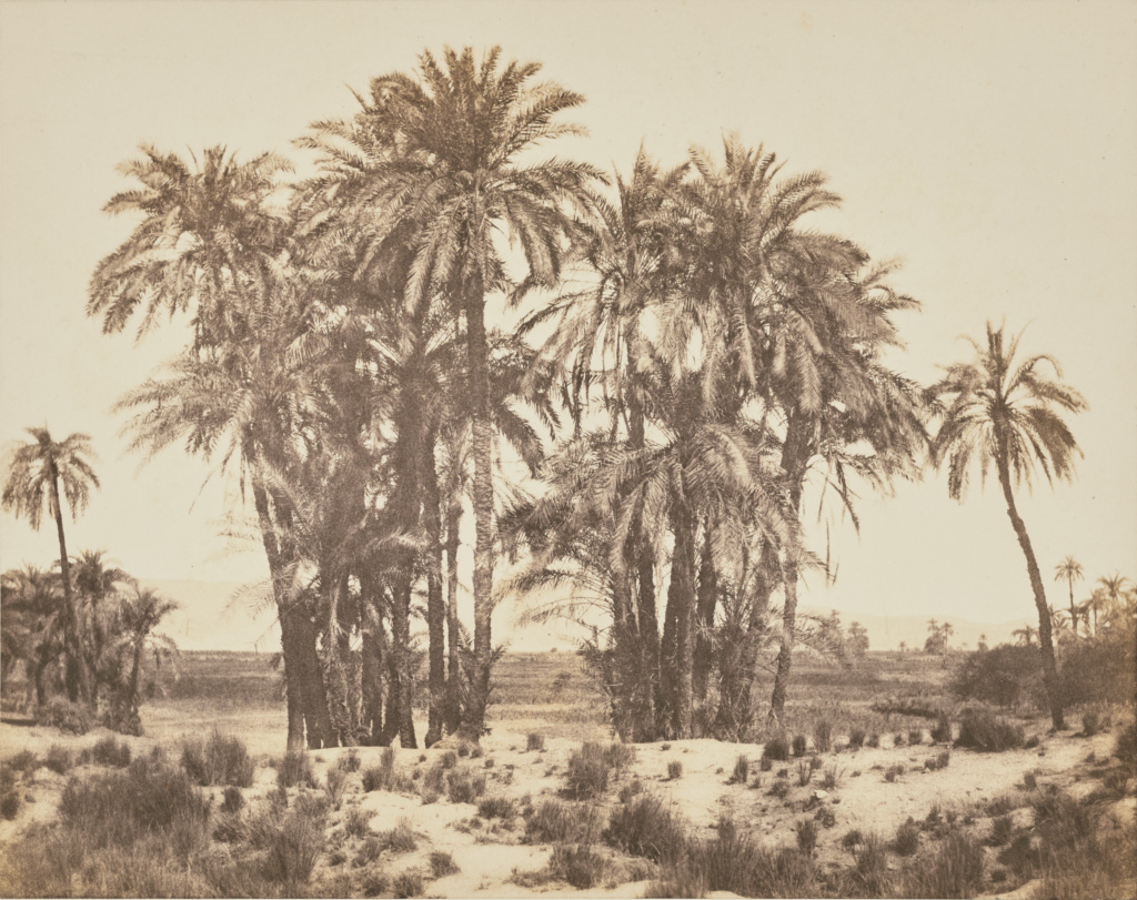 grove of date palms seen from point a karnak getty museum