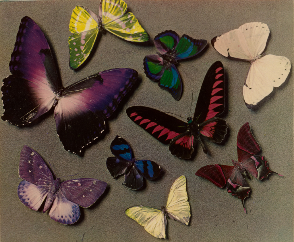 [Butterflies]; Man Ray (American, 1890 - 1976); 1935; Carbro print; 23.5 × 28.6 cm (9 1/4 × 11 1/4 in.); 84.XP.446.18; Rights Statement: In Copyright; Copyright: © Man Ray Trust ARS-ADAGP