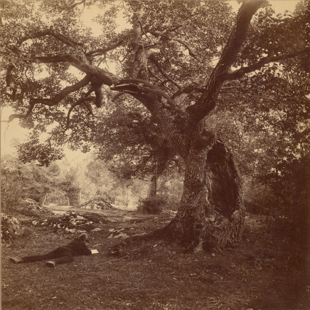 Forêt de Fontainebleau; William Drooke Harrison (French, died 1893); about 1867; Albumen silver print; 18.6 × 18.4 cm (7 5/16 × 7 1/4 in.); 84.XP.453.15; The J. Paul Getty Museum, Los Angeles; Rights Statement: No Copyright - United States