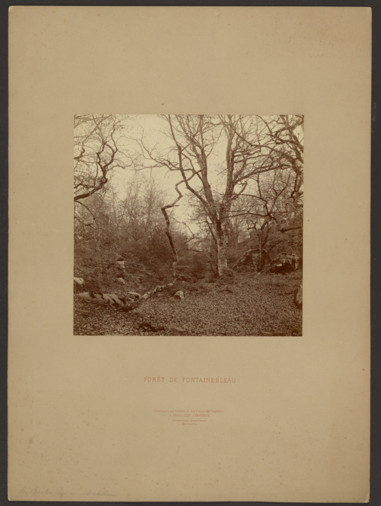 Forét de Fontainebleau; William Drooke Harrison (French, died 1893); about 1867; Albumen silver print; 19.1 × 19.7 cm (7 1/2 × 7 3/4 in.); 84.XP.687.55; The J. Paul Getty Museum, Los Angeles; Rights Statement: No Copyright - United States