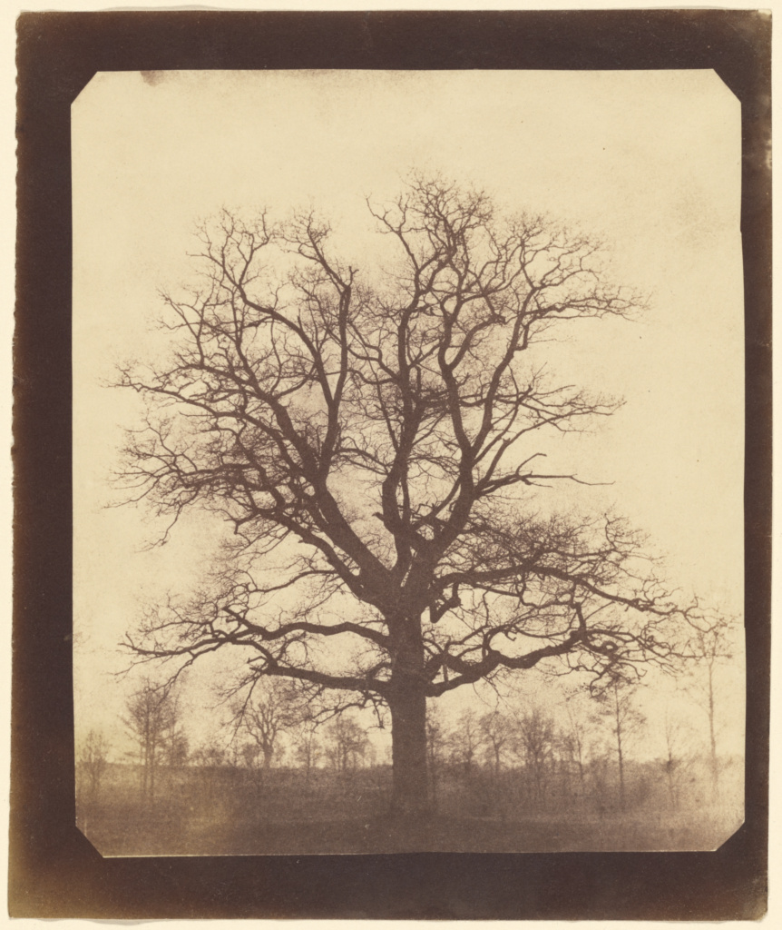 What Fox Talbot Could Have Done With >> An Oak Tree In Winter Getty Museum