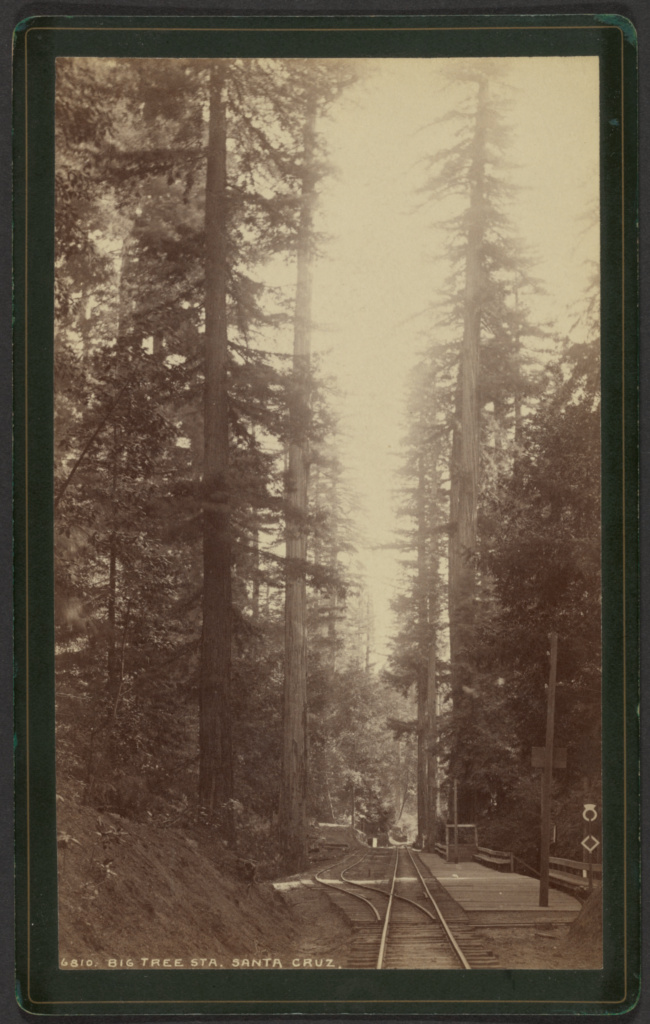 Big Tree Station, Santa Cruz; William Henry Jackson (American, 1843 - 1942); about 1871; Albumen silver print; 18.6 × 11.1 cm (7 5/16 × 4 3/8 in.); 85.XM.5.10; The J. Paul Getty Museum, Los Angeles; Rights Statement: No Copyright - United States