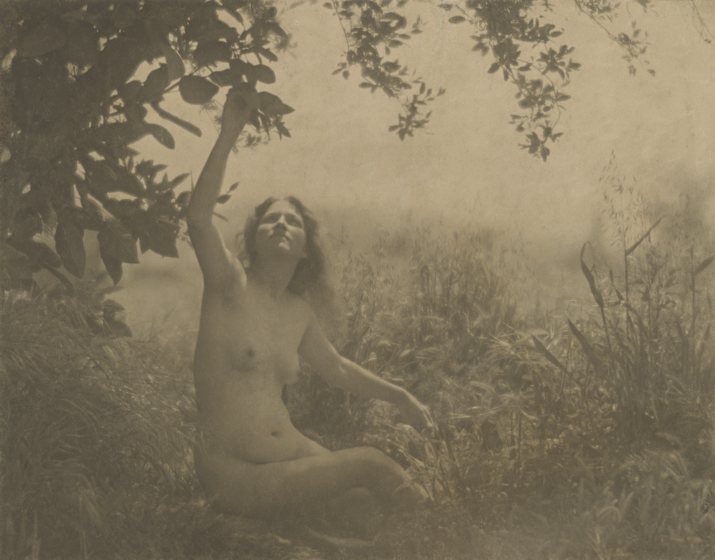 Edward weston nudes by weston, edward