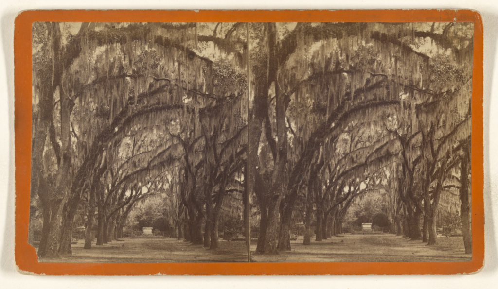 Bonaventure. [Savannah, Georgia]; O. Pierre Havens (American, 1838 - 1912, active Savannah, Georgia); 1880s; Albumen silver print; 84.XC.873.628; Rights Statement: No Copyright - United States