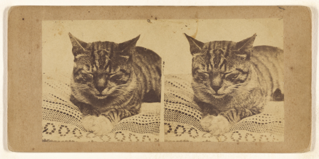[Cat sleeping]; Unknown; about 1865; Albumen silver print; 84.XC.702.203; The J. Paul Getty Museum, Los Angeles; Rights Statement: No Copyright - United States