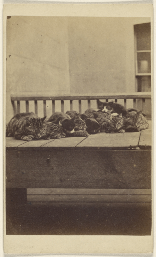 """[""""The Brighton Cats"""": nine cats asleep on a porch]; Henry Pointer (British, 1822 - 1889); about 1872; Albumen silver print; 84.XD.1157.2108; The J. Paul Getty Museum, Los Angeles; Rights Statement: No Copyright - United States"""
