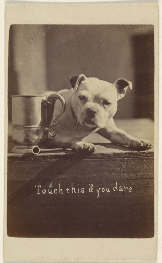 Touch this if you dare [little dog guarding a cup]; Henry Pointer (British, 1822 - 1889); 1870–1872; Albumen silver print; 84.XD.1157.2125; Rights Statement: No Copyright - United States