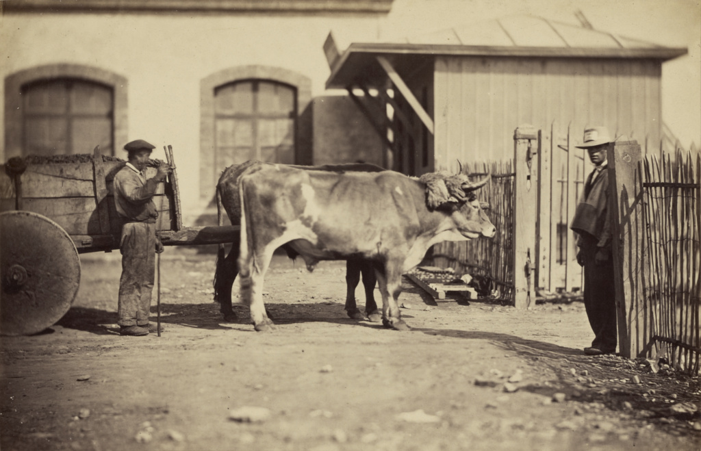 [Man standing behind ox-drawn cart, another man at entrance to a gate]; Trois Empereurs, des; Spain; about 1865; Albumen silver print; 16.4 × 25.6 cm (6 7/16 × 10 1/16 in.); 84.XX.371.3; The J. Paul Getty Museum, Los Angeles; Rights Statement: No Copyright - United States