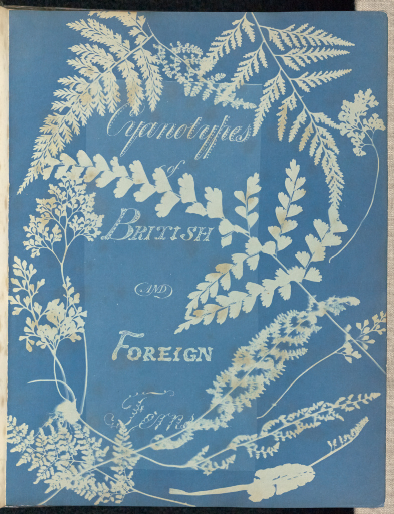 Cyanotypes of British and Foreign Ferns; Anna Atkins (British, 1799 - 1871), and Anne Dixon (British, 1799 - 1877); England; 1853; Cyanotype; 25.4 × 19.4 cm (10 × 7 5/8 in.); 84.XO.227.1; The J. Paul Getty Museum, Los Angeles; Rights Statement: No Copyright - United States