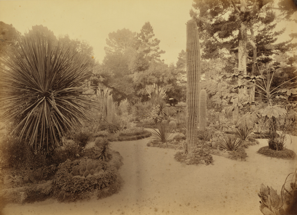 [Monterey, California. Arizona Garden, Hotel Del Monte.]; Carleton Watkins (American, 1829 - 1916); Monterey, California, United States; about 1883; Albumen silver print; 39.1 × 54.1 cm (15 3/8 × 21 5/16 in.); 94.XM.109.9; The J. Paul Getty Museum, Los Angeles, Gift in memory of Kathleen W. Naef; Rights Statement: No Copyright - United States