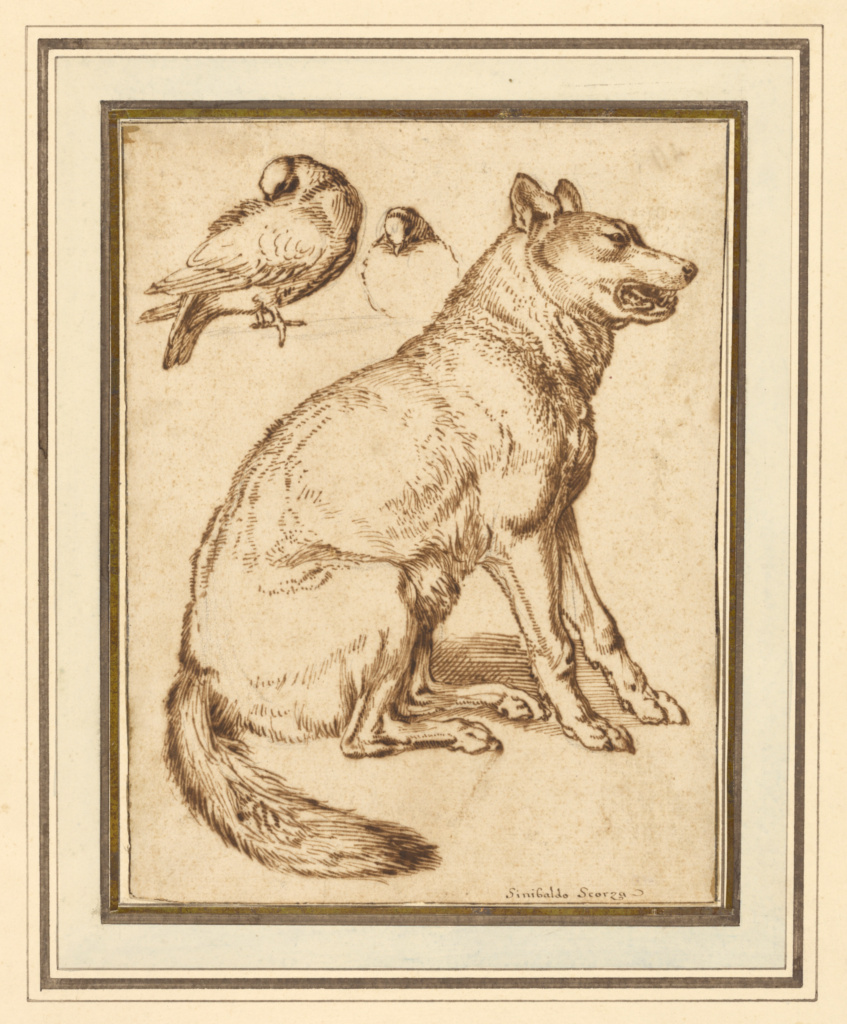 A Wolf and Two Doves; Sinibaldo Scorza (Italian, 1589 - 1631); Italy; about 1610–1620; Pen and brown ink over black chalk; 24.1 × 18.4 cm (9 1/2 × 7 1/4 in.); 96.GB.313; The J. Paul Getty Museum, Los Angeles; Rights Statement: No Copyright - United States