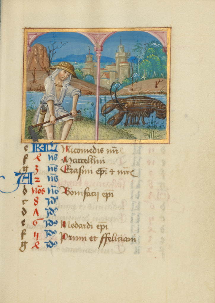 June Calendar Page; Mowing; Cancer; Unknown; early 16th century; Tempera colors on parchment; Leaf: 13.5 × 10.5 cm (5 5/16 × 4 1/8 in.); Ms. Ludwig IX 16 (83.ML.112), fol. 6; Rights Statement: No Copyright - United States