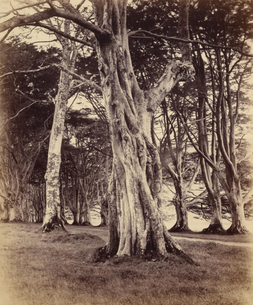Beech Trees, Inveraray; Vernon Heath (British, 1819 - 1895, active London, England); Inveraray, Scotland; 1871; Albumen silver print; 27.5 × 22.7 cm (10 13/16 × 8 15/16 in.); 84.XO.868.1.33; The J. Paul Getty Museum, Los Angeles; Rights Statement: No Copyright - United States