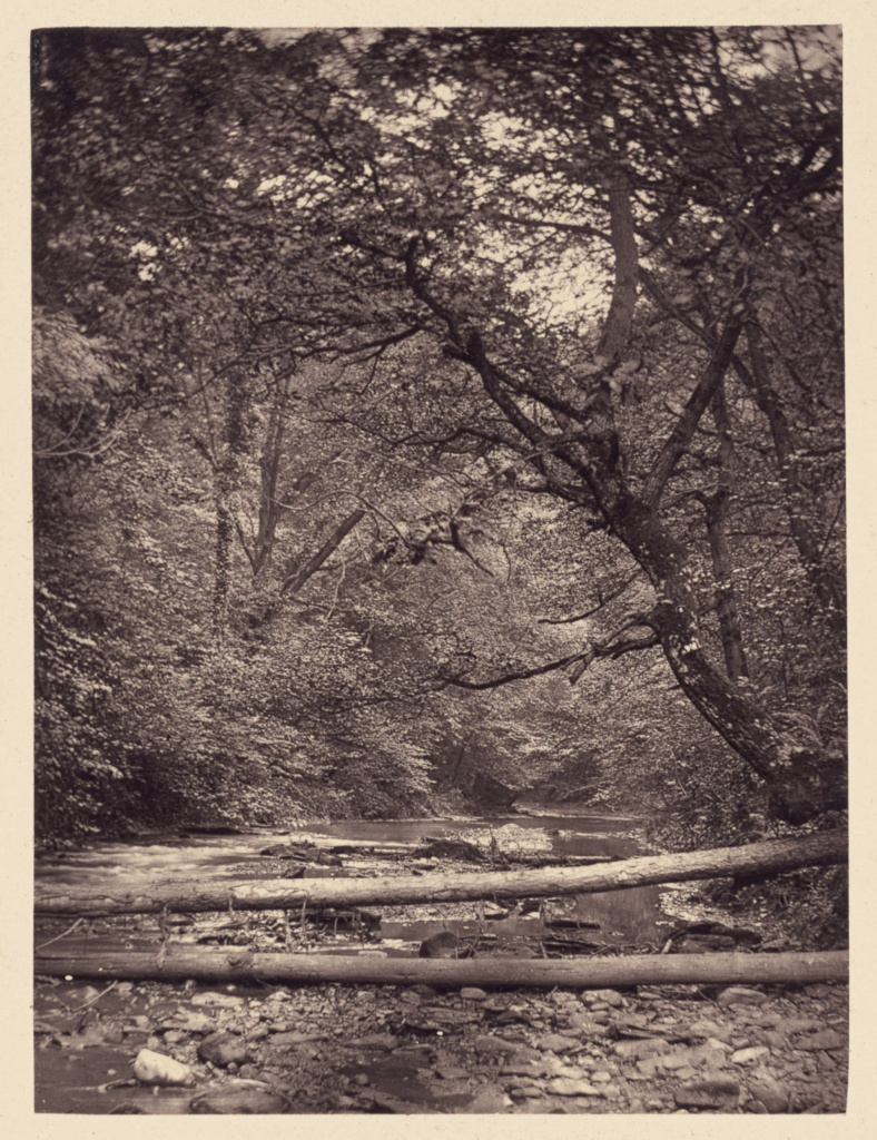 [Fallen trees in forest]; Arthur Brown (British, active 1850s); Saltburn-on-the-Sea, North Yorkshire, England; 1878; Carbon print; 9.7 × 7.2 cm (3 13/16 × 2 13/16 in.); 84.XO.952.5.5; The J. Paul Getty Museum, Los Angeles; Rights Statement: No Copyright - United States
