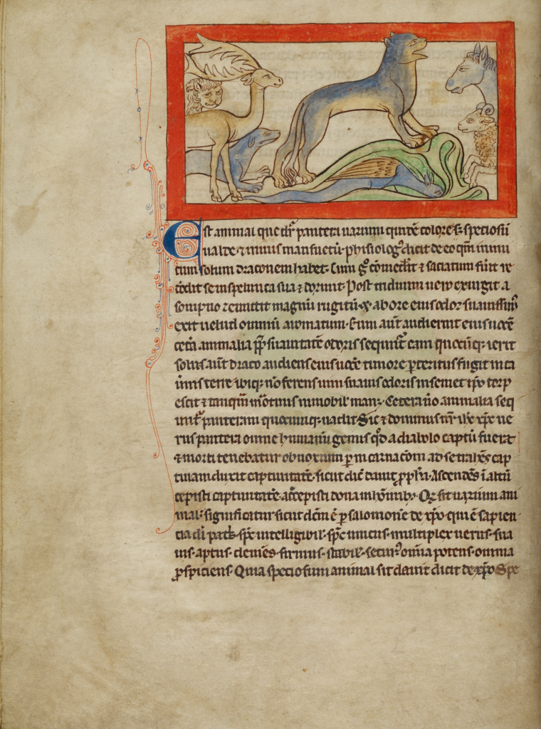 A Panther; Unknown; England; about 1250 - 1260; Pen-and-ink drawings tinted with body color and translucent washes on parchment; Leaf: 21 × 15.7 cm (8 1/4 × 6 3/16 in.); Ms. 100 (2007.16), fol. 16V; The J. Paul Getty Museum, Los Angeles, Ms. 100, fol. 16V; Rights Statement: No Copyright - United States