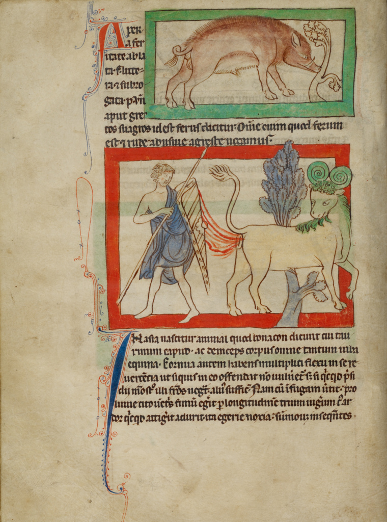 A Wild Boar; A Bonnacon; Unknown; England; about 1250 - 1260; Pen-and-ink drawings tinted with body color and translucent washes on parchment; Leaf: 21 × 15.7 cm (8 1/4 × 6 3/16 in.); Ms. 100 (2007.16), fol. 26v; The J. Paul Getty Museum, Los Angeles, Ms. 100, fol. 26v; Rights Statement: No Copyright - United States