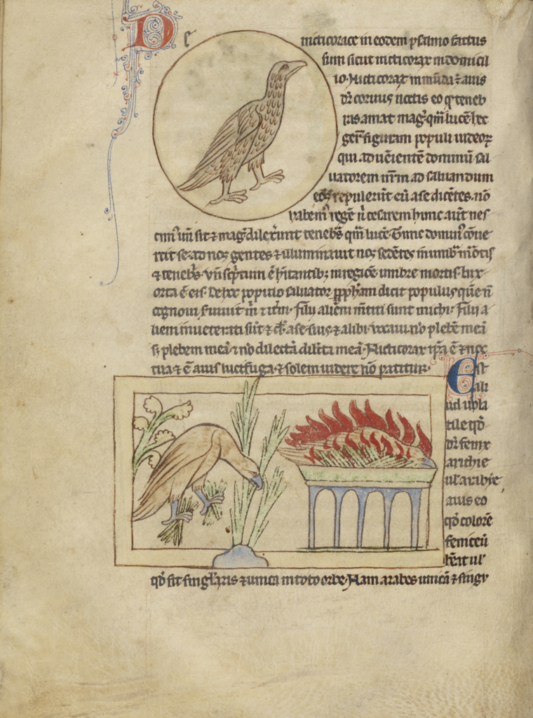 An Owl; Phoenixes; Unknown; England; about 1250–1260; Pen-and-ink drawings tinted with body color and translucent washes; Leaf: 21 × 15.7 cm (8 1/4 × 6 3/16 in.); Ms. 100 (2007.16), fol. 41v; The J. Paul Getty Museum, Los Angeles, Ms. 100, fol. 41v; Rights Statement: No Copyright - United States