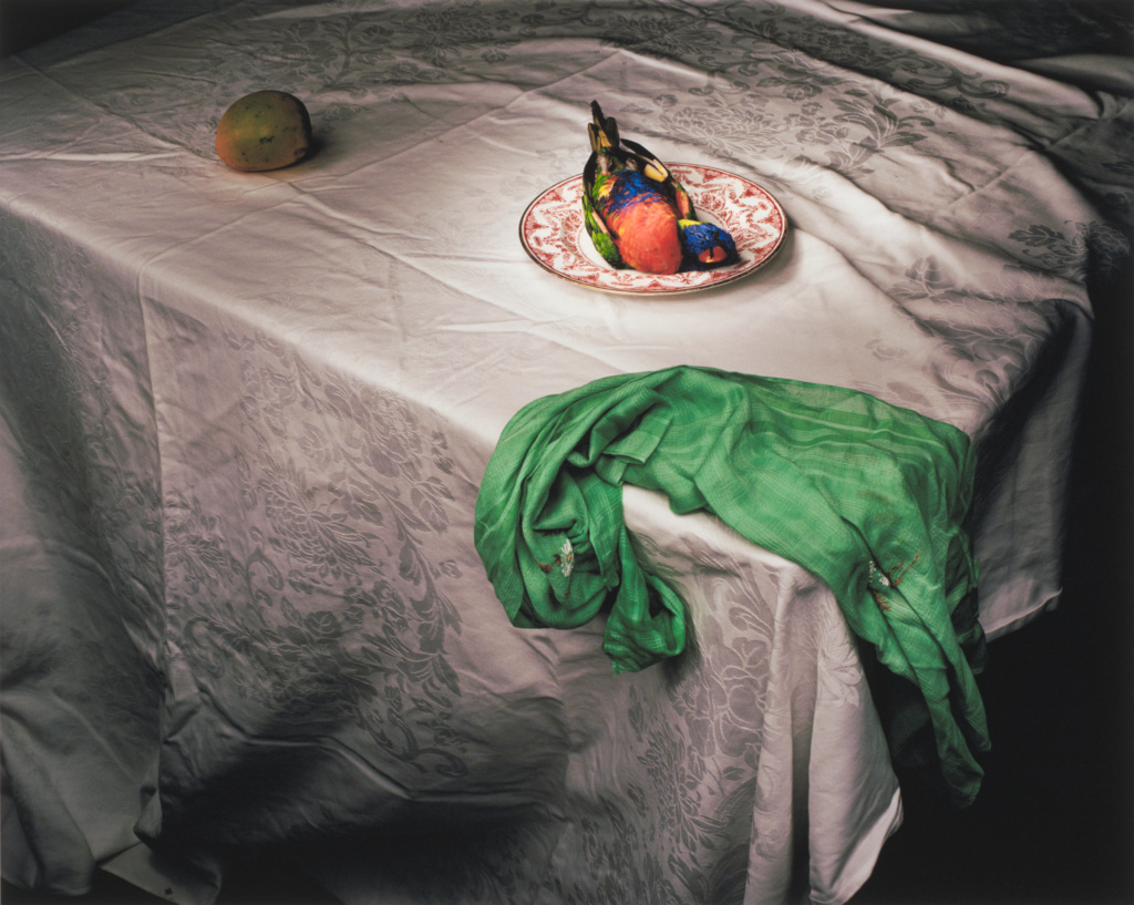 Lorikeet with Green Cloth; Marian Drew (Australian, born 1960); 2006; Digital pigment print; 71.8 × 89.5 cm (28 1/4 × 35 1/4 in.); 2009.44; Purchased with funds provided by the Photographs Council; Rights Statement: In Copyright; Copyright: © Marian Drew