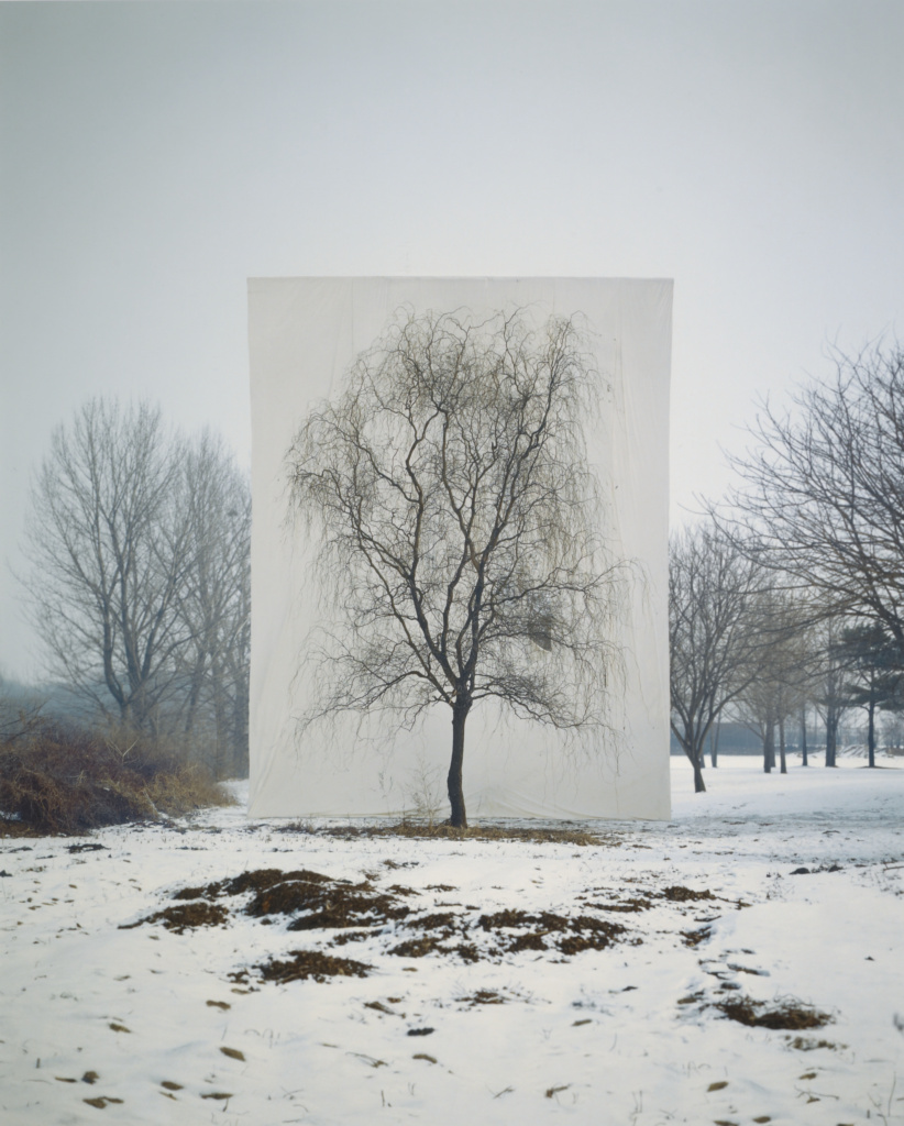 Tree #3; Myoung Ho Lee (South Korean, born 1975); South Korea; negative 2006; print 2009; Inkjet print; 40 × 32 cm (15 3/4 × 12 5/8 in.); 2009.97.2; The J. Paul Getty Museum, Los Angeles, Purchased with funds provided by the Photographs Council; Rights Statement: In Copyright; Copyright: © Myoung Ho Lee, Courtesy Yossi Milo Gallery, New York