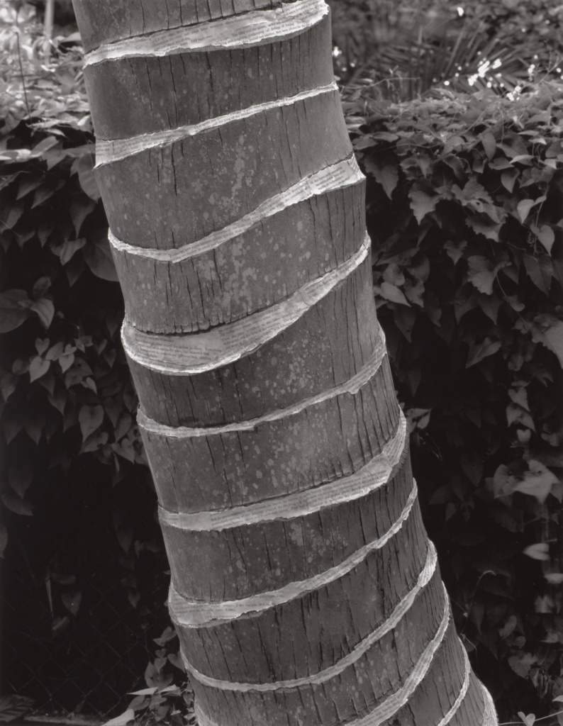 Forest; Simryn Gill (Singaporean, born 1959); Australia; 1996–1998; Gelatin silver print; 122 × 94.8 cm (48 1/32 × 37 5/16 in.); 2009.93.4; The J. Paul Getty Museum, Los Angeles, Purchased with funds provided by the Photographs Council; Rights Statement: In Copyright; Copyright: © Simryn Gill