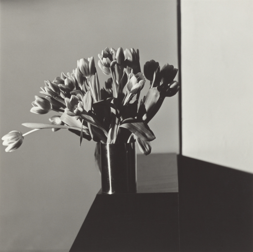 Tulips; Robert Mapplethorpe (American, 1946 - 1989); New York, New York, United States; 1978; Gelatin silver print; 35.4 × 35.4 cm (13 15/16 × 13 15/16 in.); 2011.7.9; Jointly acquired by the J. Paul Getty Trust and the Los Angeles County Museum of Art, with funds provided by the J. Paul Getty Trust and the David Geffen Foundation; Rights Statement: In Copyright; Copyright: © Robert Mapplethorpe Foundation