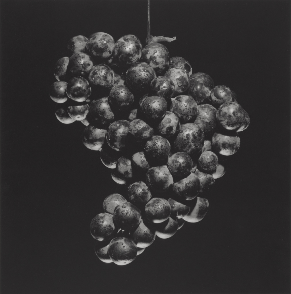Grapes; Robert Mapplethorpe (American, 1946 - 1989); New York, New York, United States; negative 1985; print 2004; Gelatin silver print; 38.5 × 38 cm (15 3/16 × 14 15/16 in.); 2011.7.20; Jointly acquired by the J. Paul Getty Trust and the Los Angeles County Museum of Art, with funds provided by the J. Paul Getty Trust and the David Geffen Foundation; Rights Statement: In Copyright; Copyright: © Robert Mapplethorpe Foundation
