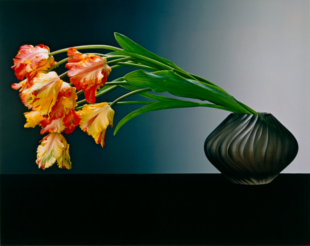 Parrot Tulips; Robert Mapplethorpe (American, 1946 - 1989); New York, New York, United States; 1988; Dye imbibition print; 52.6 × 66.1 cm (20 11/16 × 26 in.); 2011.9.40; Jointly acquired by the J. Paul Getty Trust and the Los Angeles County Museum of Art; partial gift of The Robert Mapplethorpe Foundation; partial purchase with funds provided by the J. Paul Getty Trust and the David Geffen Foundation; Rights Statement: In Copyright; Copyright: © Robert Mapplethorpe Foundation