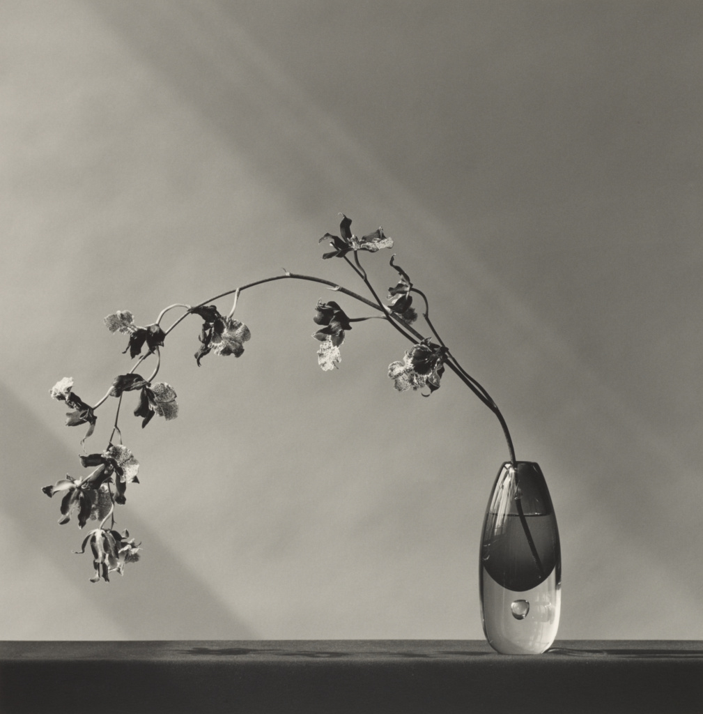 Orchid; Robert Mapplethorpe (American, 1946 - 1989); New York, New York, United States; negative 1982; print 2005; Gelatin silver print; 39 × 38.4 cm (15 3/8 × 15 1/8 in.); 2016.57.834; Gift of The Robert Mapplethorpe Foundation to the J. Paul Getty Trust and the Los Angeles County Museum of Art; Rights Statement: In Copyright; Copyright: © Robert Mapplethorpe Foundation