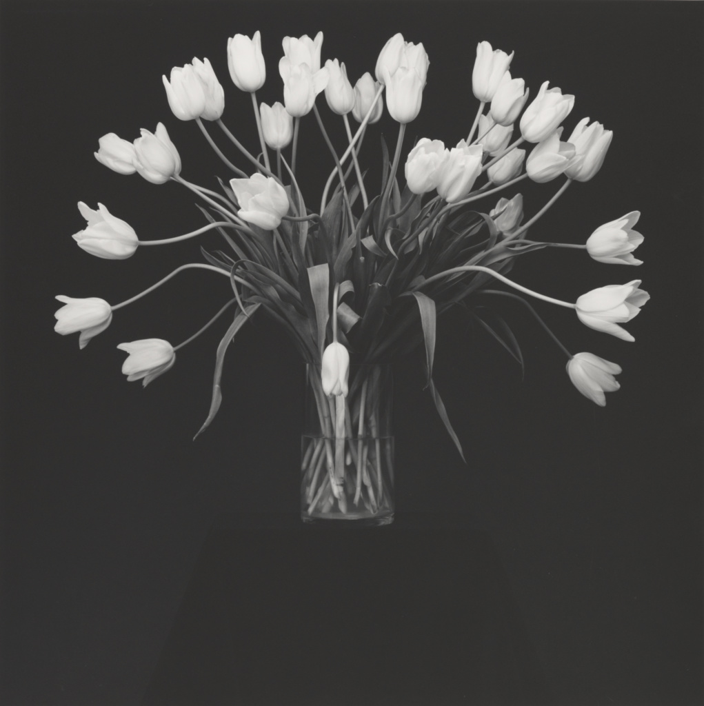 Tulips; Robert Mapplethorpe (American, 1946 - 1989); New York, New York, United States; negative 1988; print 1990; Gelatin silver print; 49.1 × 49 cm (19 5/16 × 19 5/16 in.); 2012.52.27; Gift of The Robert Mapplethorpe Foundation to The J. Paul Getty Trust and the Los Angeles County Museum of Art; Rights Statement: In Copyright; Copyright: © Robert Mapplethorpe Foundation